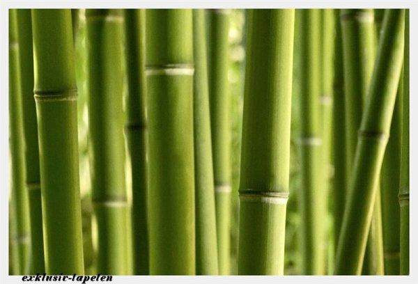 XXL wallpaper Bamboo 5 x 3,33 Meter (150g Vlies)