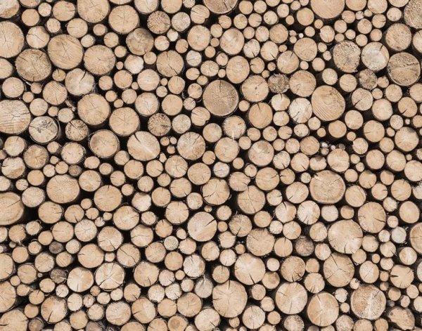 Global Fusion - Panel 318 X 250 CM Logs Stirnholz