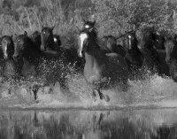 Global Fusion - Panel 318 X 250 CM Horeses Pferde