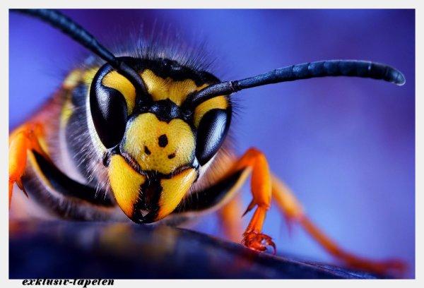 M wallpaper  Wasp 1,33 x 2 Meter (150g Vlies)
