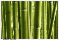 L wallpaper Bamboo  3 x 2,5 Meter (150g Vlies)