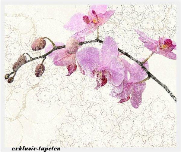 L wallpaper Orchis 3 x 2,5 Meter (150g Vlies)