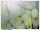 XL wallpaper Dandelion 4 x 2,67 Meter (150g Vlies)