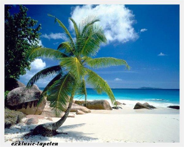 XL wallpaper Beach 4 x 2,67 Meter (150g Vlies)